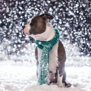 фото Жителей Тверской области предупреждают о надвигающемся снегопаде