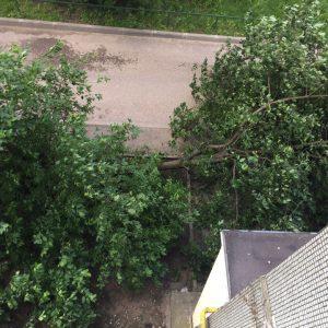 фото Шквалистый ветер валил деревья в Твери и Тверской области