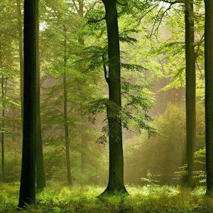 """фото Проект """"Академия леса"""" тверской станции юннатов признан лучшим в сфере экологического образования"""