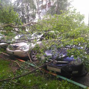 фото В Конаково шквалистый ветер повалил деревья на автомобили