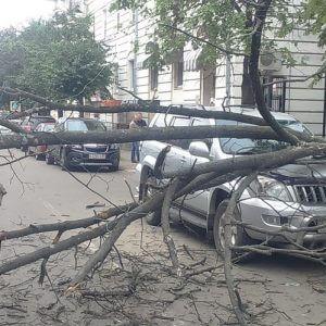 фото В Твери упавшее дерево повредило припаркованный автомобиль