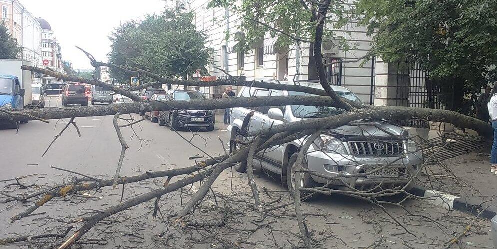 В Твери упавшее дерево повредило припаркованный автомобиль