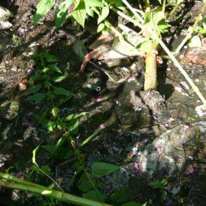 фото В Тверской области в результате сброса опасных отходов пострадала река