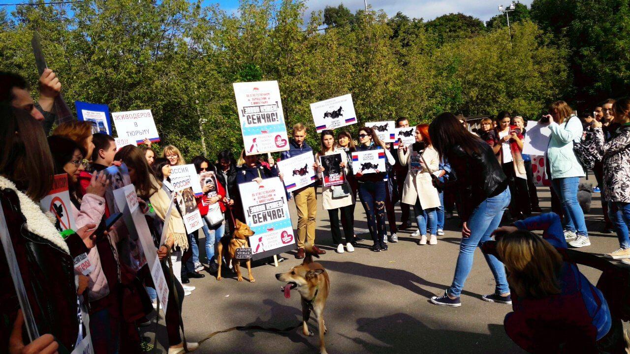 В Твери прошёл митинг в поддержку принятия закона о защите животных