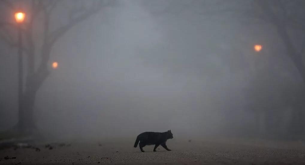 Тверскую область накроет туман