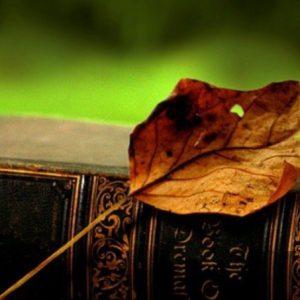 """фото Тверь присоединилась к международному поэтическому конкурсу """"Всемирный день поэзии"""""""