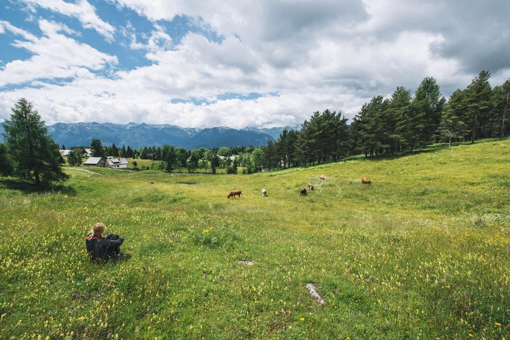 37% жителей Твери мечтают жить в окружении природы, а не мегаполиса