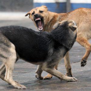 фото Собаки лают – но караван не идёт