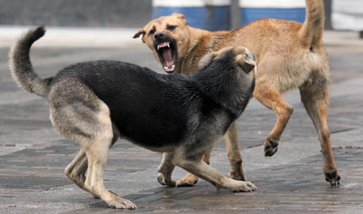 Собаки лают – но караван не идёт