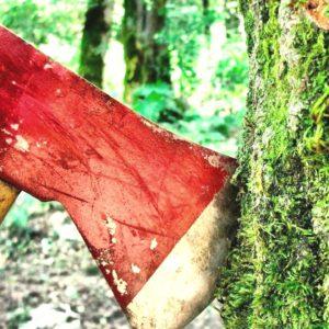 фото Более 6 миллионов заплатит колхоз в Тверской области за нарушение лесного законодательства