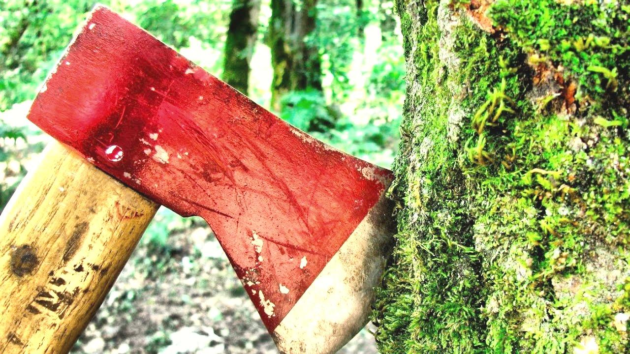 Более 6 миллионов заплатит колхоз в Тверской области за нарушение лесного законодательства