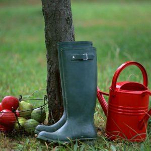 фото Специалисты филиала ФГБУ «Россельхозцентр» по Тверской области подготовили рекомендации для садоводов