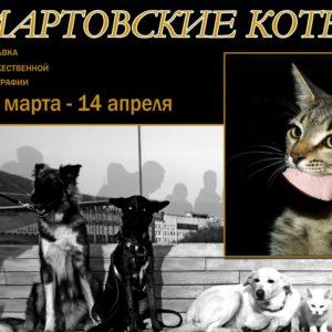 фото Тверичей приглашают посмотреть на мартовских котов