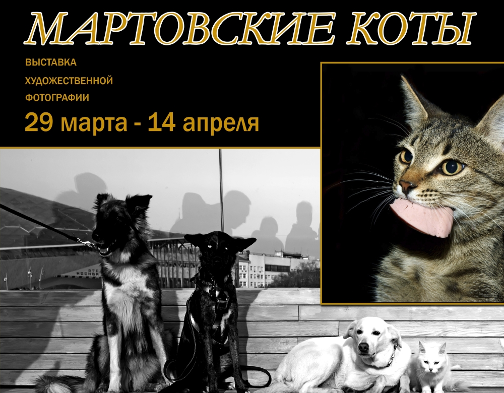 Тверичей приглашают посмотреть на мартовских котов