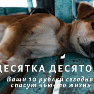 фото В Твери собирают средства в помощь инициативной группе по защите животных