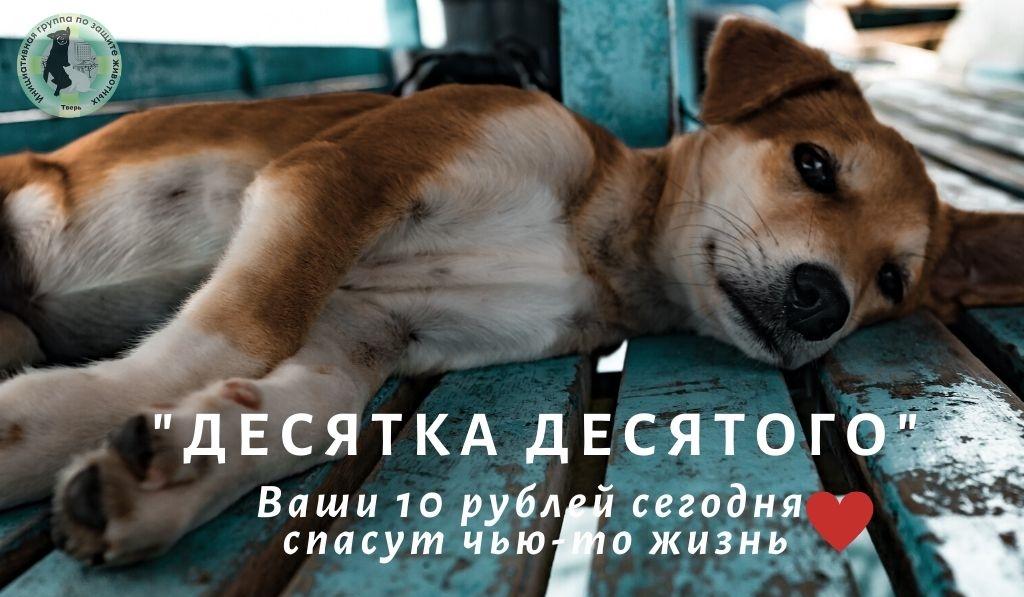 В Твери собирают средства в помощь инициативной группе по защите животных
