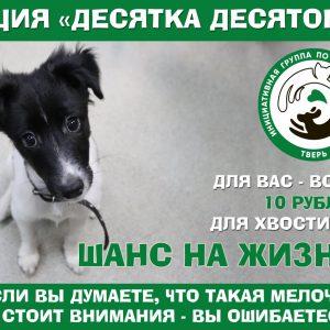 фото В Тверской области проходит традиционная акция помощи бездомным животным