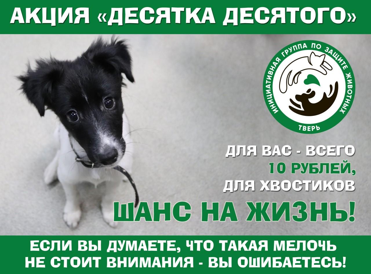 В Тверской области проходит традиционная акция помощи бездомным животным