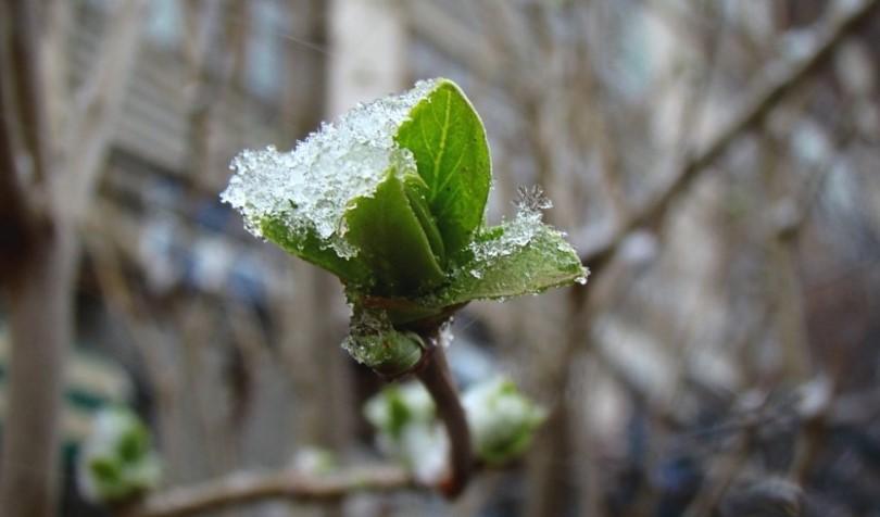 Жителей Тверской области предупреждают о сильном ветре и мокром снеге